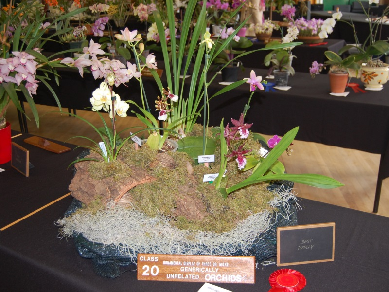 Picture south east orchid show